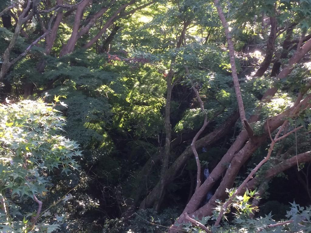 生駒山,登山