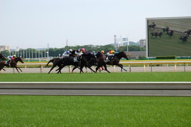 東京競馬場 混雑