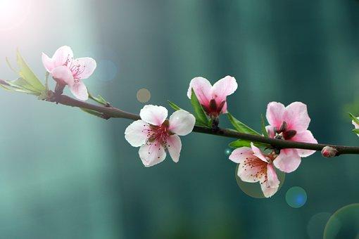 桃の節句 お祝い メッセージ